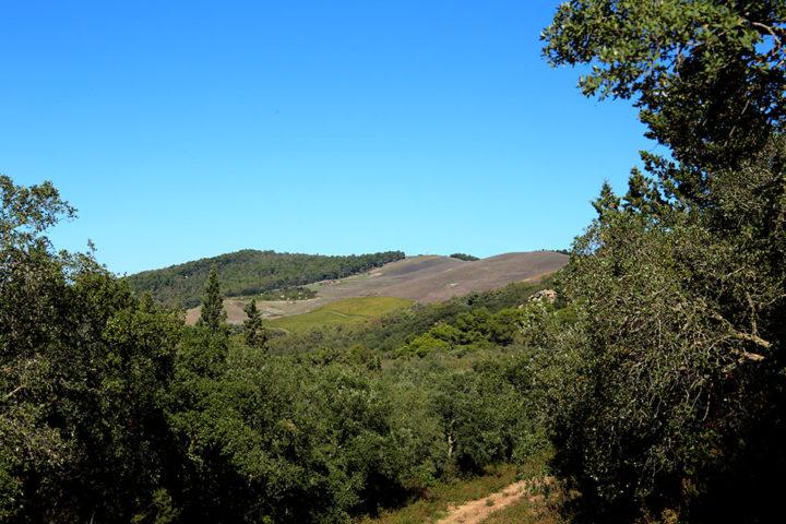 Panorama su bosco Scorace