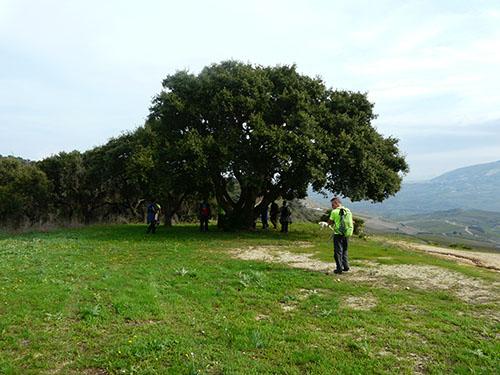 escursione-sosta-quercia