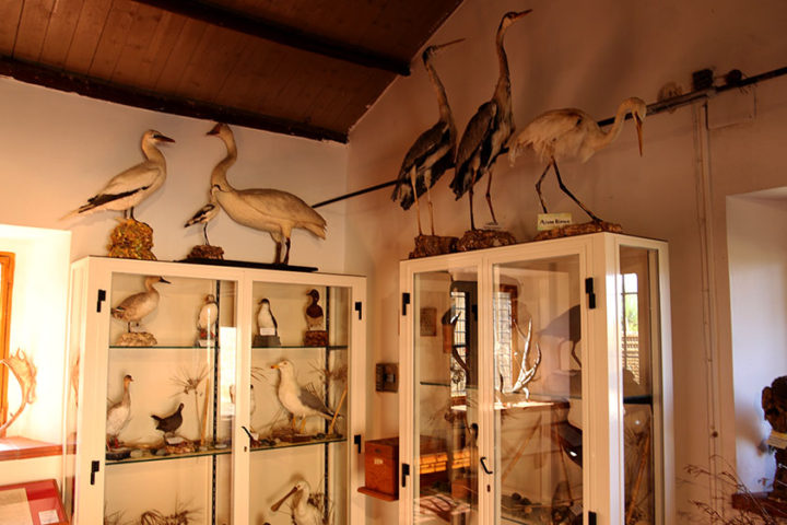 Esposizione uccelli imbalsamati