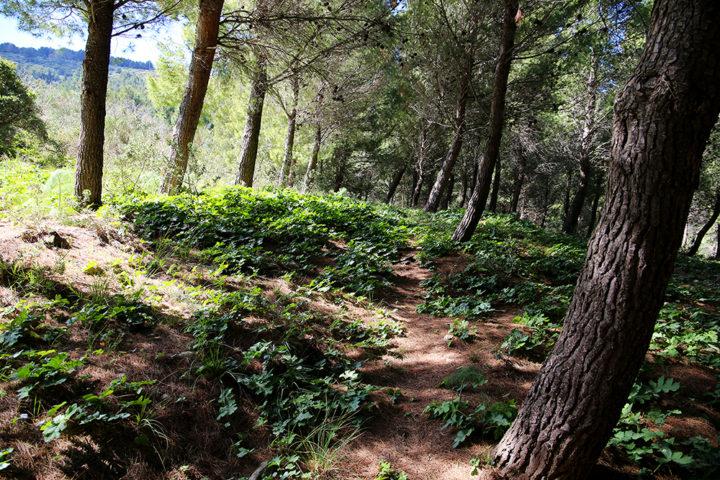 sentiero-cai-604- bosco