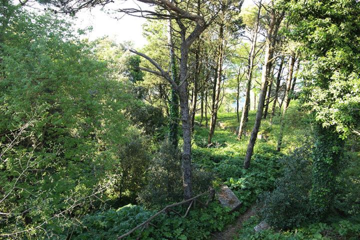 bosco di Erice