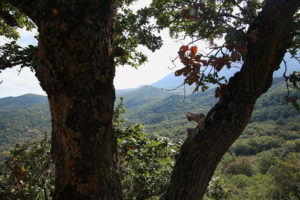 bosco-ficuzza