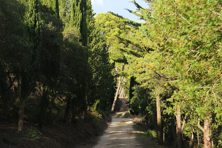 bosco_anbimbe_alberi