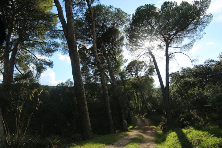bosco_anbimbe_alberi_sole
