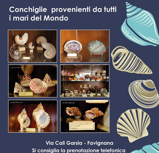 locandina_museo-malacologico