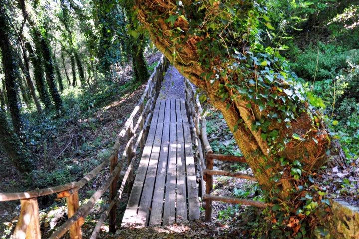 Il ponticello che attraversa il bosco