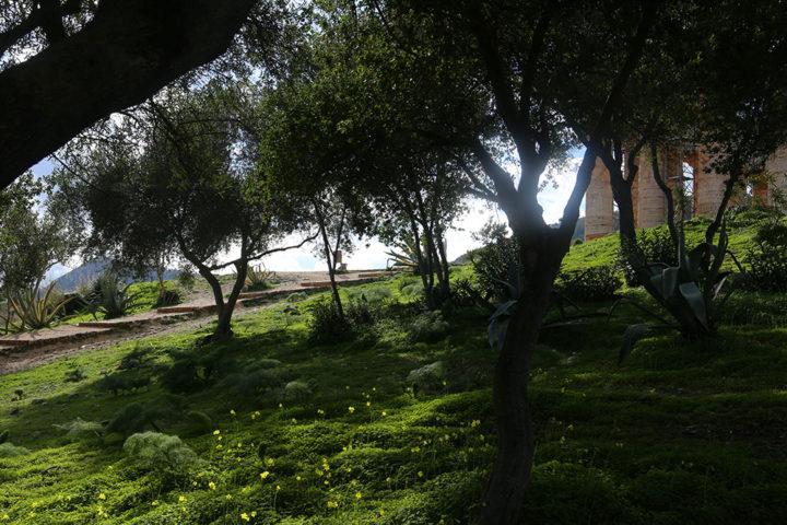 L'area verde attorno al Tempio di Segesta