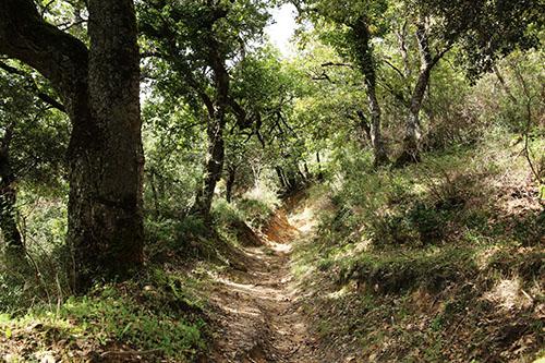 sentiero-bosco