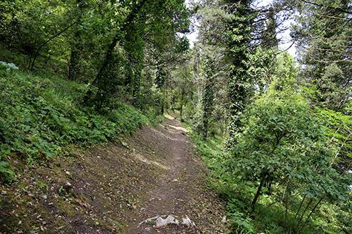 Il sentiero del bosco