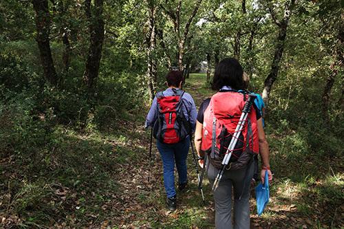trekking-bosco-ficuzza